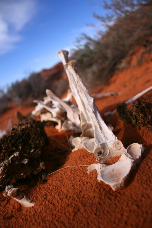 Bones on Arch Trail